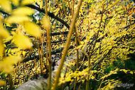 Image Ref: DR014<br /> Location: RJ Hamer Arboretum<br /> Date: 13th April 2014