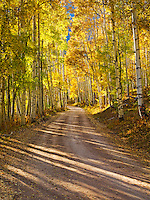 Kebler Pass above the ski town of Crested Butte, Colorado is home of the largest aspen grove in the world.  This photo was taken from the main road through the pass