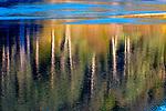 USA, Washington, Olympic National Park, reflection of coastal forest in surf