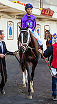 OZONE PARK, NY - NOVEMBER 26, 2016:Tellmeafookystory #1 in the paddock for the Grade 2 Remsen Stakes for 2-year olds, at Aqueduct Racetrack . (Photo by Sue Kawczynski/Eclipse Sportswire/Getty Images)