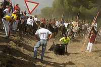 A man goes for the final thrust to kill a bull during the bull of the plain 'Toro de la Vega' festival, on September 15, 2009 in Tordesillas. The festival is one of the oldest in Spain with roots dating back to the fifteenth century. The bull has to be enticed across the river from the village to the plain 'Vega' before it can be killed to honour the 'Virgen de la Pena'.  © Pedro ARMESTRE.