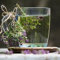 Thymian-Tee, Thymiantee, Tee aus Thymian, Kräutertee, Blütentee, Heiltee, Sträußchen, Sträusschen, Thymian, Wilder Thymian, Feld-Thymian, Feldthymian, Quendel, Feld-Sandthymian, Arznei-Thymian, Arzneithymian, Thymus pulegioides, Sammelart Thymus pulegioides, Thyme, Wild Thyme, tea, herb tea, herbal tea, thyme tea, Le serpolet, thym serpolet