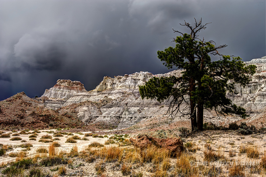 A lone pine tree in a harsh desert environment