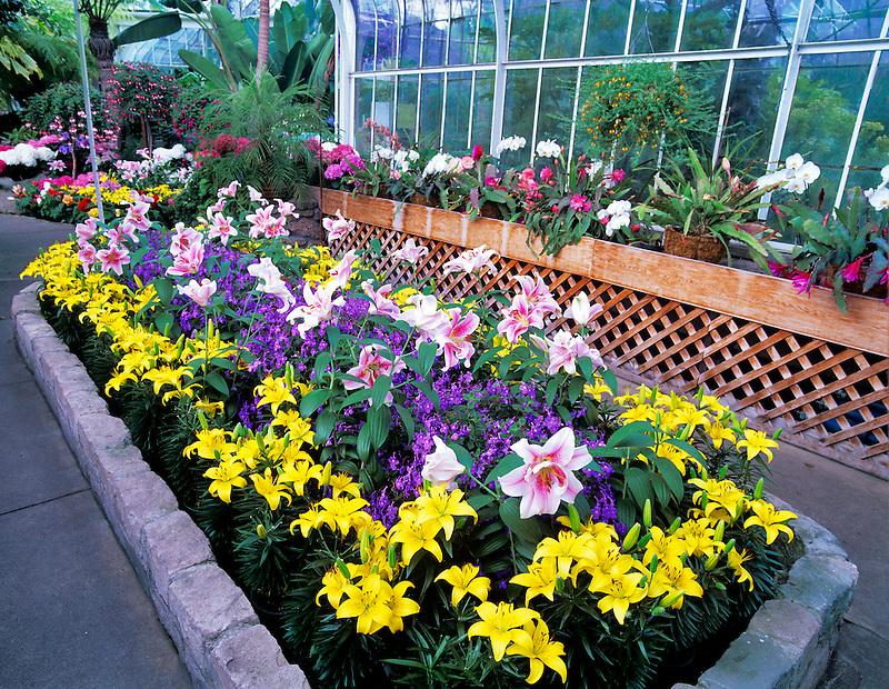 A variety of flowers in WW Seymour Botanical Conservatory. Tacoma, Washington