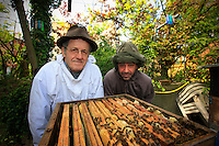 "In Montreuil, Alain Llobregat, 41 years old, photographer and decorator, beekeeper for 3 years now, and his master in apiculture, his neighbor Jacques Linon, 69 years old. Their gardens are next to each other; a small fence crossed by a ladder separates them. Chance often comes into play in the introduction to beekeeping. Here, it's a case of passing on the knowledge, which started with a hive recuperated by Jacques and which Alain agreed to set up on the roof of his workshop. Since then, they work together on the big jobs, the harvests, the treatments. Jacques has two and a half hives; it's beautiful to see. The previous year, he produced 30 kilos per hive. ""It's a passion, because I don't sell the honey, I give it away,"" says Alain. ""It's a very fragrant, fruity honey, a true delight. When we are with the bees, we have to free our minds, we can't be thinking of other things."" ."