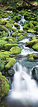 Stream, Olympic National Park, Washington, USA