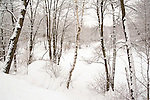 Snow Covered Trees and River after a Fresh Snowfall in Rural New Hampshire