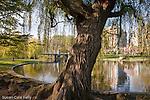 Springtime at the Boston Public Garden, Boston, MA, USA