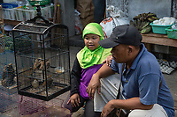 Yogyakarta, Java, Indonesia.  Father and Daughter Inspecting Birds before Deciding on a Purchase, Bird Market.