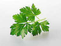 Flat leaved Parsley leaves