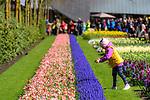 Young child enjoying spring flower displays. Keukenhof Flower Gardens, Lisse, near Amsterdam, The Netherlands.