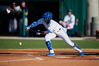 Dunedin Blue Jays Chavez Young (2) bunts during a Florida State League game against the Lakeland Flying Tigers on April 18, 2019 at Jack Russell Memorial Stadium in Clearwater, Florida.  Dunedin defeated Lakeland 6-2.  (Mike Janes/Four Seam Images)