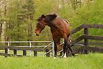 A HORSE OF SPRINGDALE FARM IN EASTERN PENNSYLVANIA