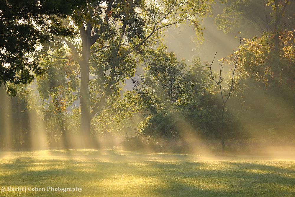 Morning Light Rachel Cohen Photography