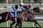 OCT 29 2014:Blue Dancer, trained by Greg Tracy, exercises in preparation for the Breeders' Cup Juvenile at Santa Anita Race Course in Arcadia, California on October 29, 2014. Kazushi Ishida/ESW/CSM