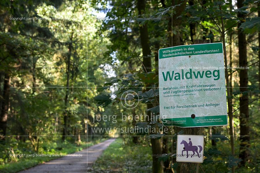 GERMANY, lower saxonia, Forest / DEUTSCHLAND, Niedersachsen, Wald, Waldweg