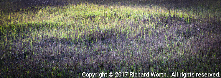 A rainy season that was actually rainy has lead to wetlands that are actually wet, and green, though there is still 'brown' as well.  Multiple image panoramic from the MLK Regional Shoreline in Oakland, California.