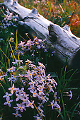 Flowers and log