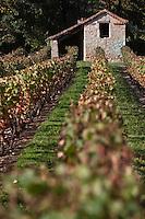 Europe/Europe/France/Midi-Pyrénées/46/Lot/env de Luzech: Vignoble AOC Cahors et cabanon de viticulteur