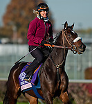 Somali Lemonade , trained by Michael Matz and to be ridden by Alex Solis exercises in preparation for the 2011 Breeders' Cup at Churchill Downs on November 1, 2011.