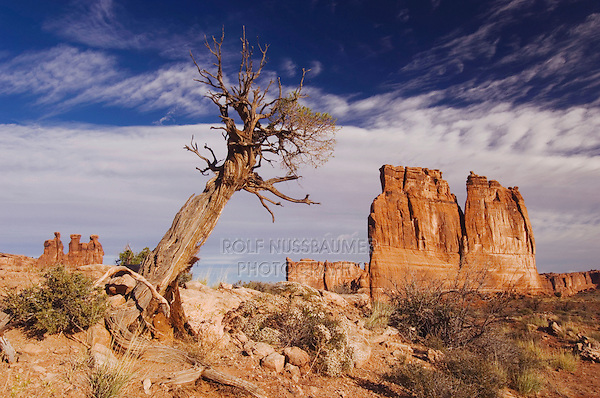 Courthouse Towers and tree, Arches National Park, Utah, USA