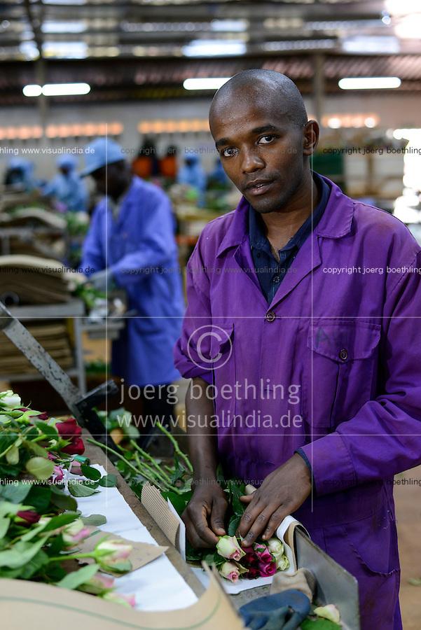 KENYA Thika near Nairobi, Simbi Roses is a fair trade rose flower farm which produces rose as cutting flowers for export to europe, packaging department / KENIA Thika bei Nairobi, Simbi Roses ist eine fairtrade zertifizierte Blumenfarm die Rosen fuer den Export nach Europa anbauen, Verpackungshalle