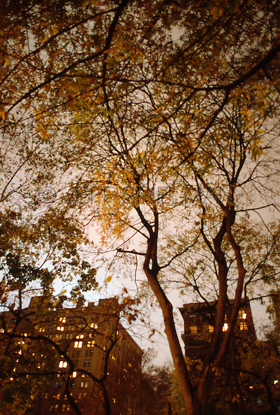 AVAILABLE FROM JEFF AS A FINE ART PRINT<br /> <br /> AVAILABLE FROM GETTY IMAGES FOR COMMECIAL AND EDITORIAL LICENSING.....Please go to www.gettyimages.com and search for image # 10149867<br /> <br /> Upward View of Trees and Buildings in Gramercy Park on an Overcast Autumn Night, New York City, New York State, USA