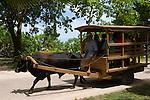 Seychelles, Island La Digue: tourist attraction ox-cart taxi<br />