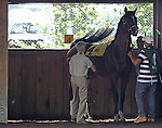 July 11, 2015: Al Khali, a 9-year-old Bill Mott trainee who has raced only once since August of 2013, is one of eight contenders in the Cape Henlopen Stakes. Holiday Star, Edgar Prado up, wins the Cape Henlopen Stakes, one and 1/2 miles on the turf for three year olds and upwards at Delaware Park in Stanton DE. Trainer is Graham Motion; owner is Augustin Stable. Joan Fairman Kanes/ESW/CSM
