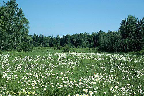 SC01-027z  Meadow - plant succession meadow - first stage - (series - SC01-027z,028z,029z,030z)