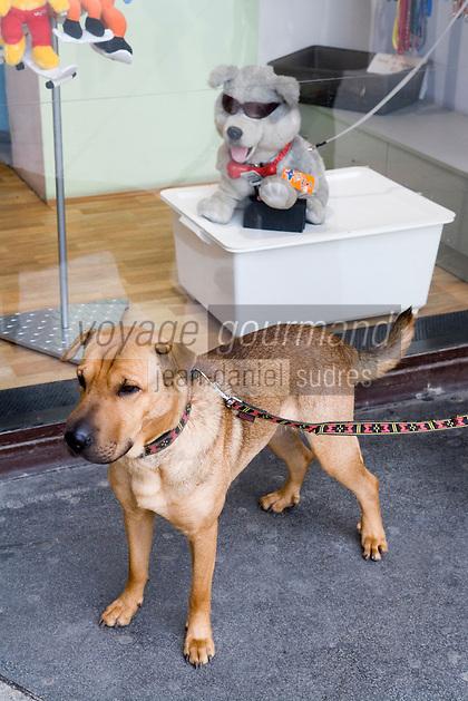 Europe/République Tchèque/Prague: chien dans la Vieille -Ville et chien dans la virtrine , Place Venceslas