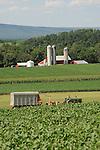 Mennonite Farmer mowing hay for silage, Union County, PA. Near Mazeppa.