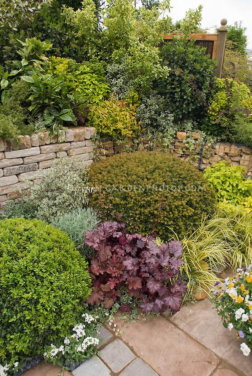Heuchera, Violas, Acorus, conifers, patio, stone wall, shaded garden