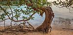 White mangrove (Avicennia marina), Kimberley, Western Australia, Australia<br /> <br /> Canon EOS 5D Mark III, EF24-105mm f/4L IS USM lens, f/11 for .5 second, ISO 100