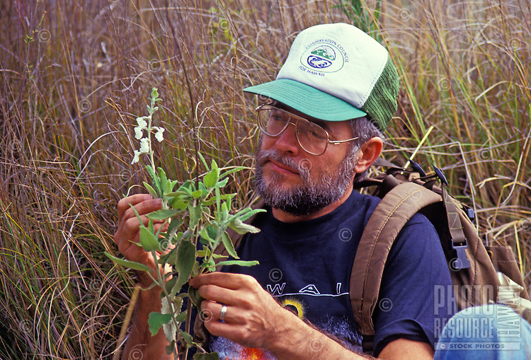 Biologist examining endangered mint plant, native to the Hawaiian Islands