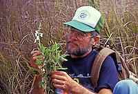 Biologist examining endangered mint plant, native to the Hawaiian Islands