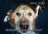 REALISTIC ANIMALS, REALISTISCHE TIERE, ANIMALES REALISTICOS, dogs, paintings+++++SethC_Lucy_IMG_7992rev,USLGSC43,#A#, EVERYDAY ,underwater dogs,photos,fotos ,Seth