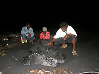 local researchers healp neesting leatherback sea turtle, Dermochelys coriacea, Dominica, West Indies, Caribbean, Atlantic