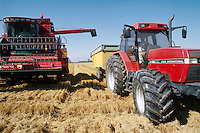- harvester machine collects the rice in a farm....- mietitrebbiatrice raccoglie il riso in una azienda agricola