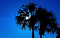 Silhouetted palm tree on Wild Dunes in the Isle of Palms, South Carolina.