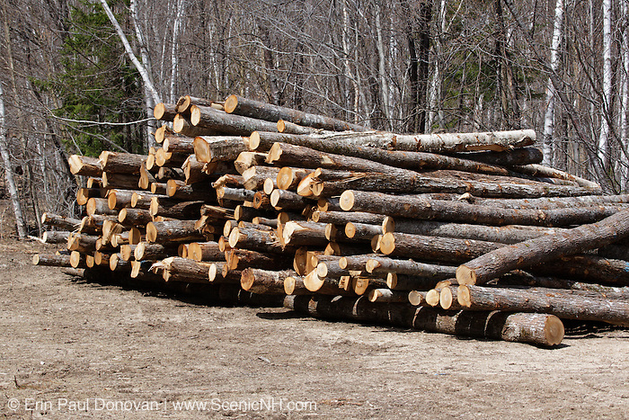 Pile of hardwood logs at landing area from the Kanc 7 Timber Harvest project in the area of Forest Road 37 along the Kancamagus Scenic Byway (route 112) in the White Mountains, New Hampshire USA