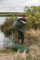 France, Gironde (33), bassin d'Arcachon, Audenge, domaine de Certes, site classé Espace Naturel Sensible par le Conservatoire du littoral,  Paul Giese pêcheur de crevettes grises<br />    Auto N°:2013-141// France, Gironde, Bassin d'Arcachon, Audenge, Delta de l'Eyre, Domaine de Certes listed by the Conservatoire du Littoral Authority as an Espace Naturel Sensible ie preservation area, <br /> Paul Giese shrimp fisherman<br />  Auto N°:2013-141