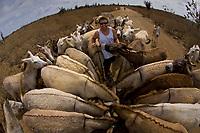 Donkeys being feed at Donkey Sanctuary Bonaire, Bonaire, Netherland Antilles, Caribbean Sea, Atlantic Ocean (cr)
