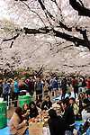 April 3, 2016, Tokyo, Japan - People drink and eat under fully bloomed cherry blossoms at a park in Tokyo on Sunday, April 3, 2016. Despite the rain, people enjoyed cherry blossom viewing party. (Photo by Yoshio Tsunoda/AFLO) LWX -ytd-