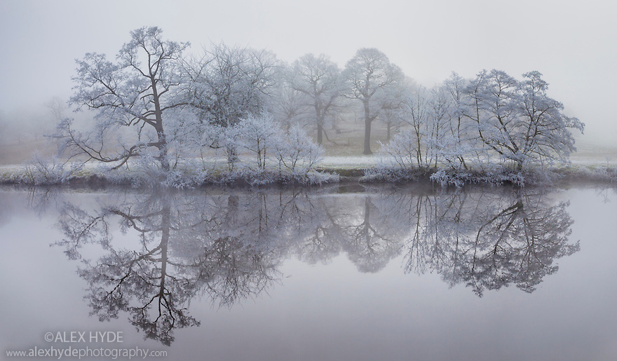 Trees coated in hoar frost reflected in the River Derwent, Chatsworth. Peak District National Park, UK. December.