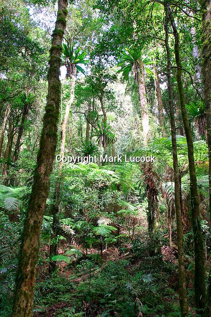 Border Ranges National Park, NSW