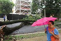 17.01.2020 - Queda de árvore na rua Abílio Soares em SP