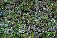 Stone wall with moss.