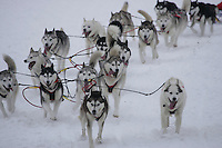 Karen Ramstead's team on trail shortly after leavingWillow Restart .  2005 Iditarod Sled Dog Race