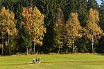 DEU, Deutschland, Bayern, Niederbayern, Naturpark Bayerischer Wald, Herbstlandschaft, Senioren beim Spaziergang | DEU, Germany, Bavaria, Lower-Bavaria, Nature Park Bavarian Forest, autumn landscape, seniors walking